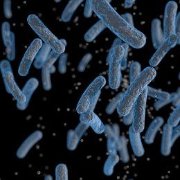 Deseinfección de bacterias